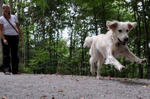 Zwei Hunde haben in Baiersbronn eine Frau angesprungen. (Symbolfoto) Foto: dpa