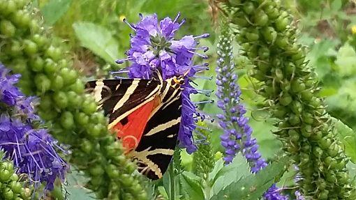 Schmetterling im Pfarrgarten Foto: Jutta Hettich