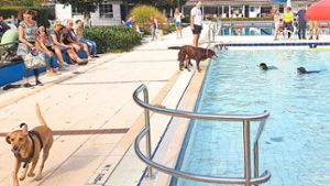 Bad Herrenalb: Hunde planschen im Waldfreibad in Bad Herrenalb