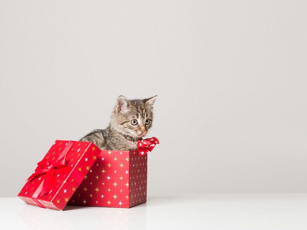 Schramberg: Tiere als Geschenk zu Weihnachten? - Schramberg ...