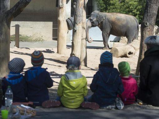Zwei Elefanten stehen in der Wilhelma in ihrem Gehege. Foto: Franziska Kraufmann/Archiv/dpa