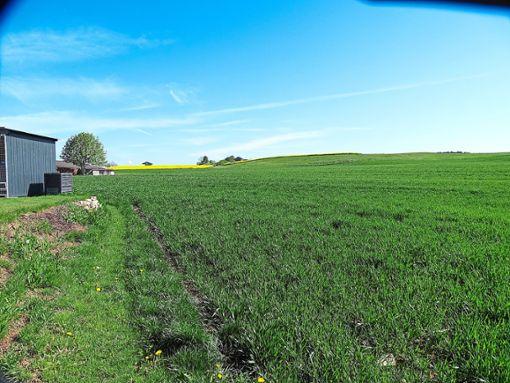In Richtung Scheune soll sich das Baugebiet nach Ansicht der Anwohner auf keinen Fall entwickeln.  Foto: Schönfelder Foto: Schwarzwälder Bote