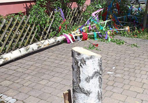 Die Anwohner haben nichts gehört. Vermutlich haben die Täter Handsägen verwendet, um den Baum zu fällen. Foto: Stocker