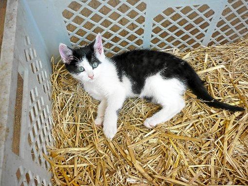 Weiterhin vermisst wird diese Katze einer Betroffenen, die die Machenschaften des 41-Jährigen aufgedeckt hat.  Foto: Archiv Foto: Schwarzwälder-Bote