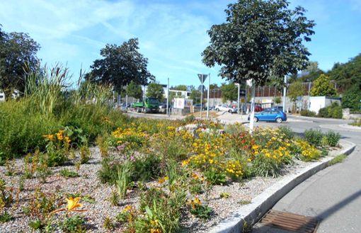 Im vergangenen Jahr neu gestalteten Grünzug blüht es bereits insektenfreundlich. Die Stadt Rottweil möchte damit einen Beitrag zum Erhalt der Artenvielfalt leisten.  Foto: Stadt Rottweil Foto: Schwarzwälder Bote