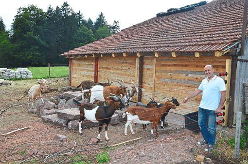 Claudio di Simio sucht noch für vier Ziegen aus dem Tierhortungs-Fall ein neues Zuhause.  Fotos: Fritsche Foto: Schwarzwälder Bote