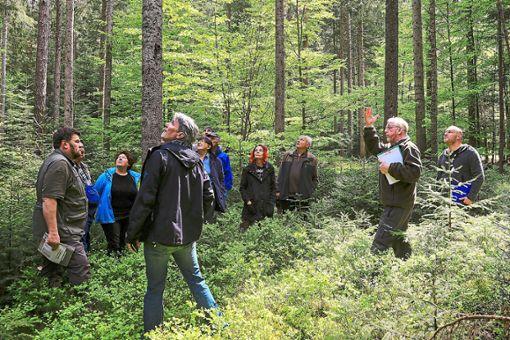 Lichte Wälder mit Heidelbeeren wie hier sind der ideale Lebensraum für Auerwild, wie die Exkursionsteilnehmer erfuhren.   Foto: Marx Foto: Schwarzwälder Bote
