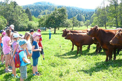 Die Kinder und Rinder schauen sich neugierig an. Währenddessen erklärt Bauer Alexander Schäfer alles, was man über die Tiere wissen muss.   Fotos: Plocher Foto: Schwarzwälder Bote