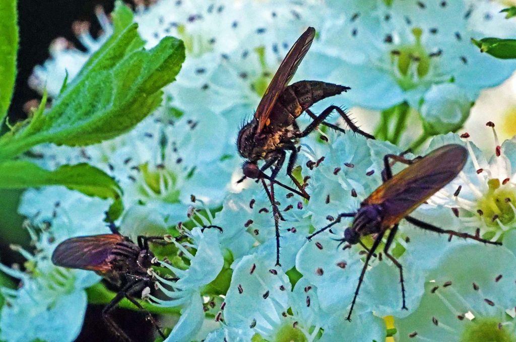 albstadt heimat f r viele v gel und insekten albstadt schwarzw lder bote. Black Bedroom Furniture Sets. Home Design Ideas