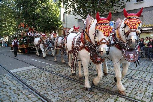 Sie gehören zum Cannstatter Volksfest dazu: Brauereipferde. Foto: www.7aktuell.de  