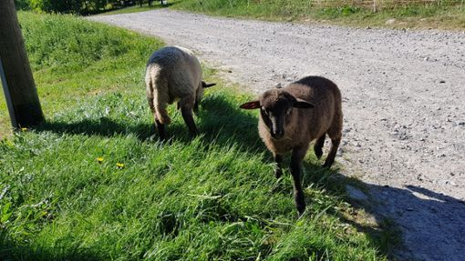 Für den Schutz von Schafsherden sollen nun schnell Fördermittel fließen.  Foto: Campos